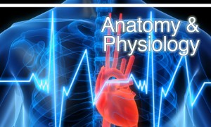 Anatomy_&_Physiology